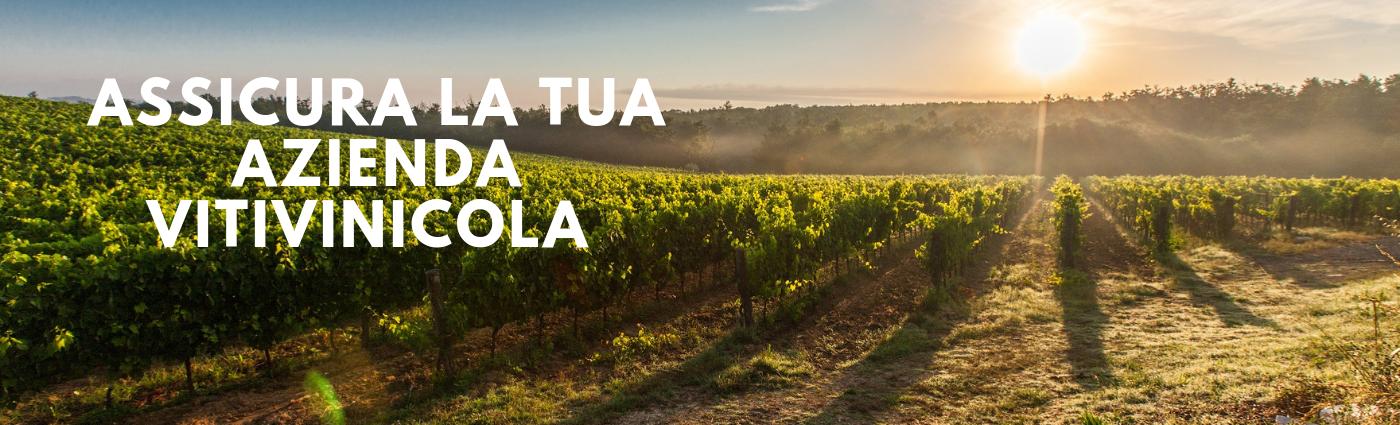 assicurazione_aziende_vitivinicole